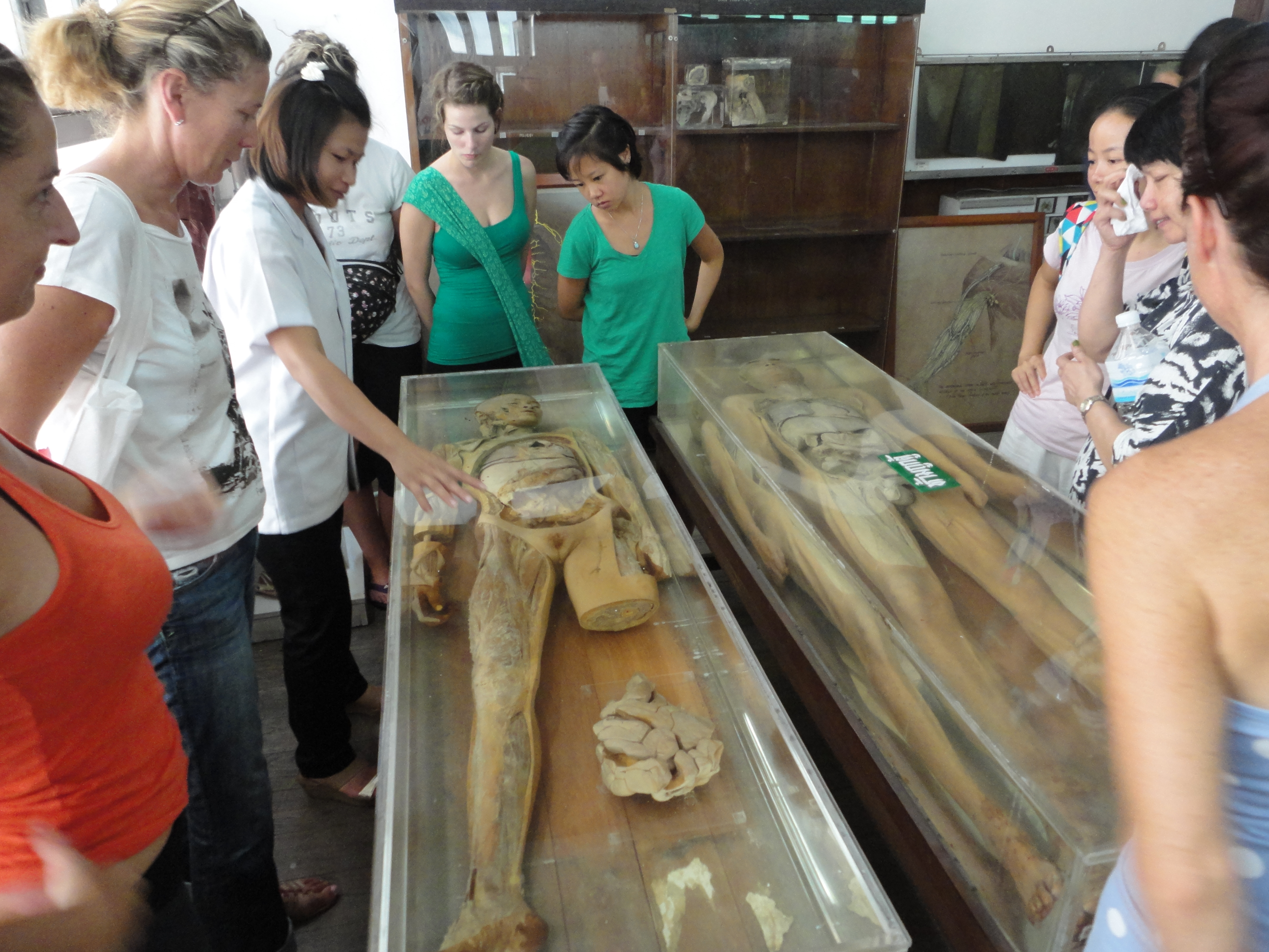Day 3 Anatomy And Physiology And Anatomy Museum Wat Po Thai